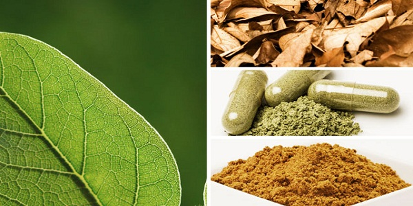 Kratom is safe and effective herb